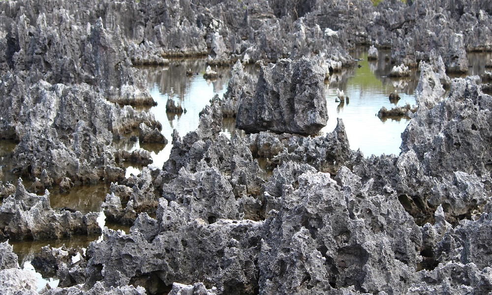 Close up of jagged rocks in water